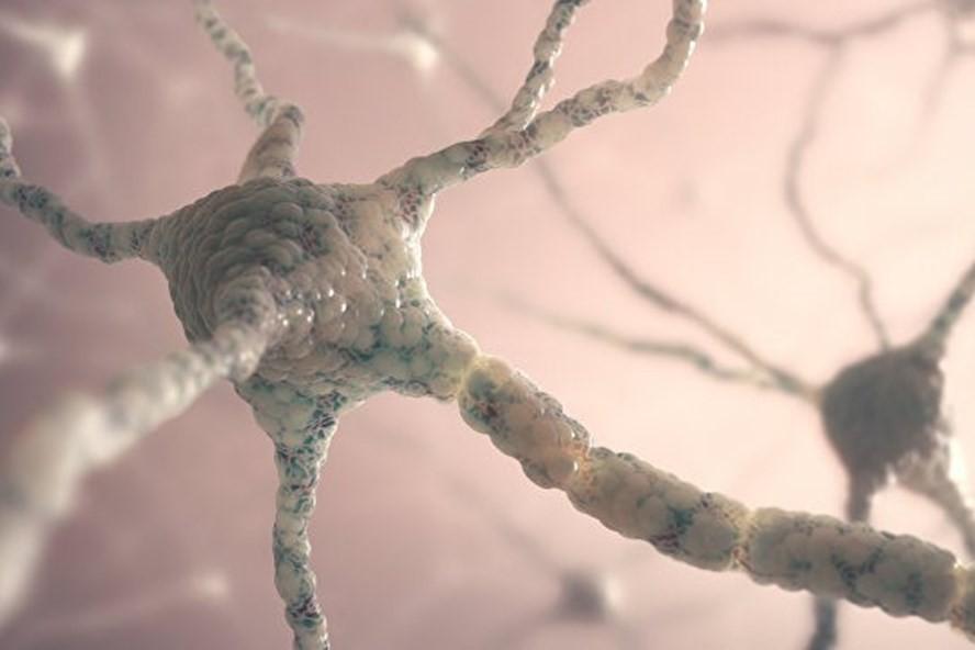 Nơron thần kinh