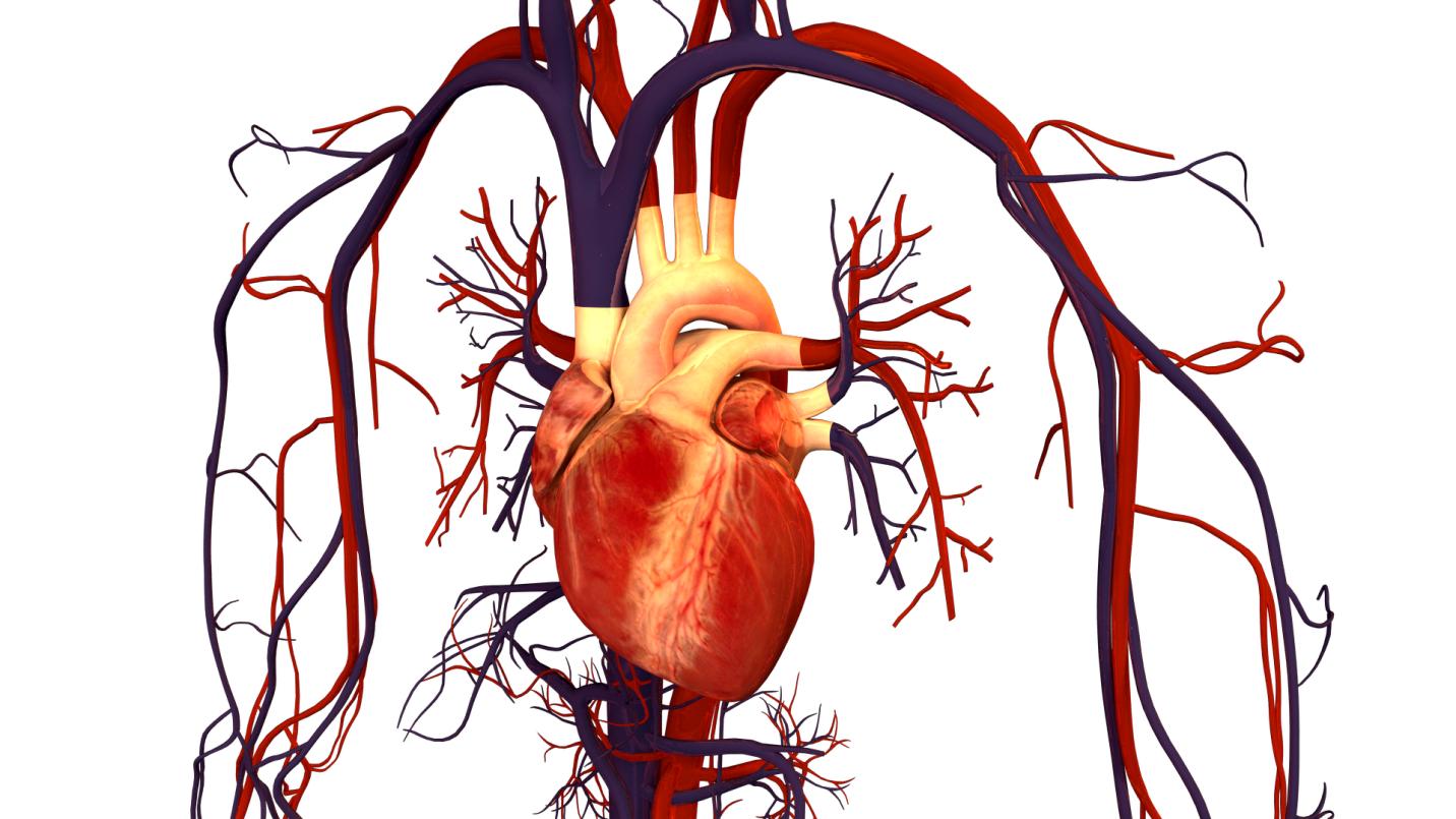mạng lưới mạch máu