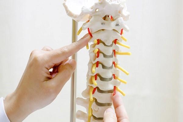xương trong cơ thể