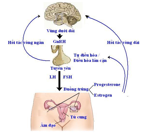 bệnh nội tiết