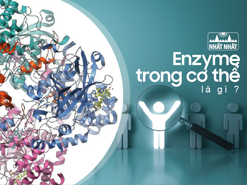Enzyme trong cơ thể